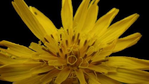 geel2